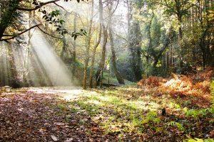 Randonnée dans la forêt à Chinon